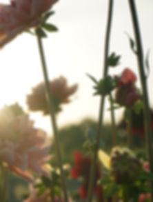 Tuin van Rose - Tarieven.jpg