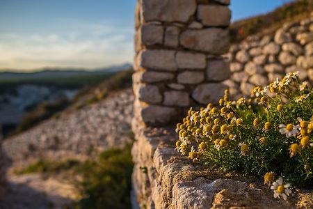 nature-3188810_1920_lars_nissen_pixabay_