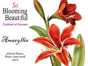 Our Cabinet of Flowers: Amaryllis