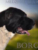 Středoasijský pastevecký pes, Turkmenský Alabaj, Közép-ázsiai Juhászkutyák; Owczarek Środkowoazjatycki, Central Asian Ovcharka, Среднеазиатская овчарка, Pastore dell´Asia Centrale, Sredneasiatskaia Ovtcharka, Stredoázijský ovčiak, Mittelasiatischer Owtscharka, Central Asian Shepherd or Ovcharka , Central Asian Shepherd Dog, Alabai, Alabay, Alabaj, Le chien de berger d'Asie centrale , Sredneasiatskaïa Ovtcharka, Ovtcharka d'Asie Centrale, Ciobanesc de Asia Centrala, Ποιμενικοι Κεντρικης Ασιας Puppies for sale, Welpen zu verkaufen, štěňata na prodej