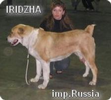 Iridzha