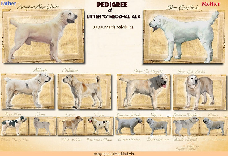 Pedigree LITTER G.jpg