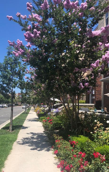 Our Neighborhood Path