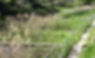 Depuración natural, plantas macrofitas, riego, reutilización, reciclaje de agua, biocultivos, huertos ecológicos, aljibes