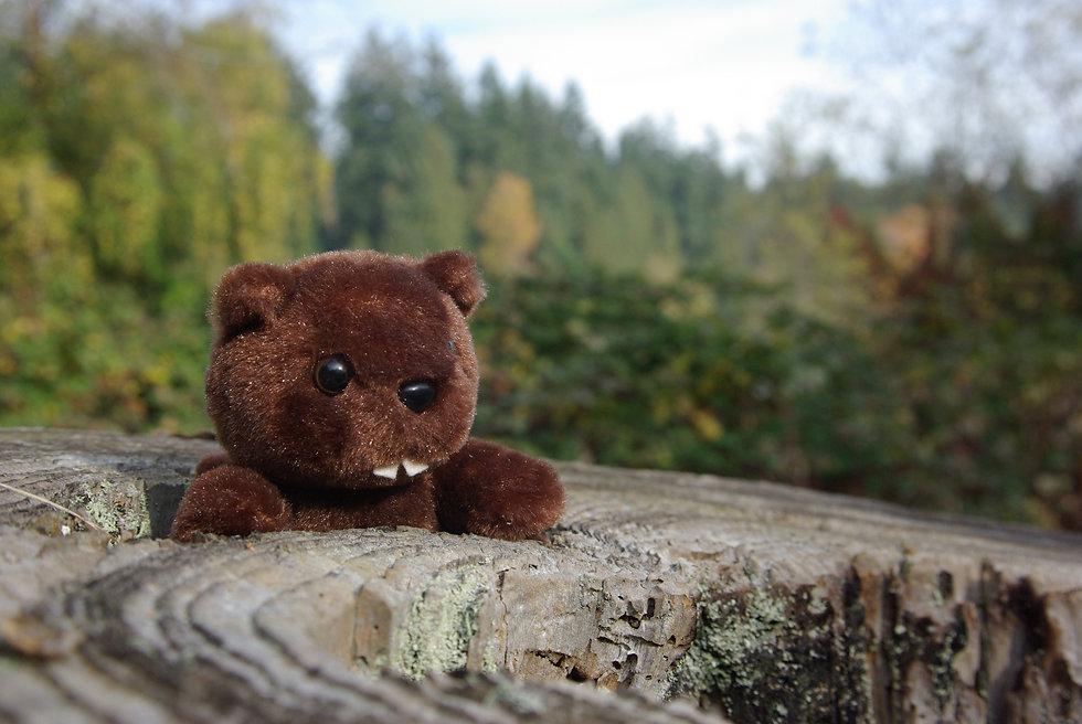 4_Beaver.jpg
