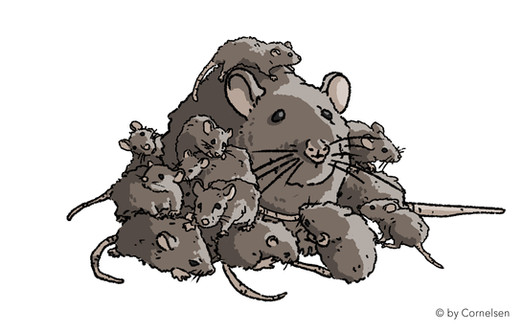 Rattenhaufen