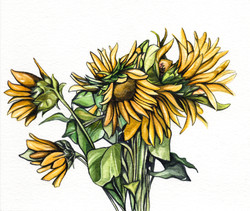 Sunflowers Watercolour Painting