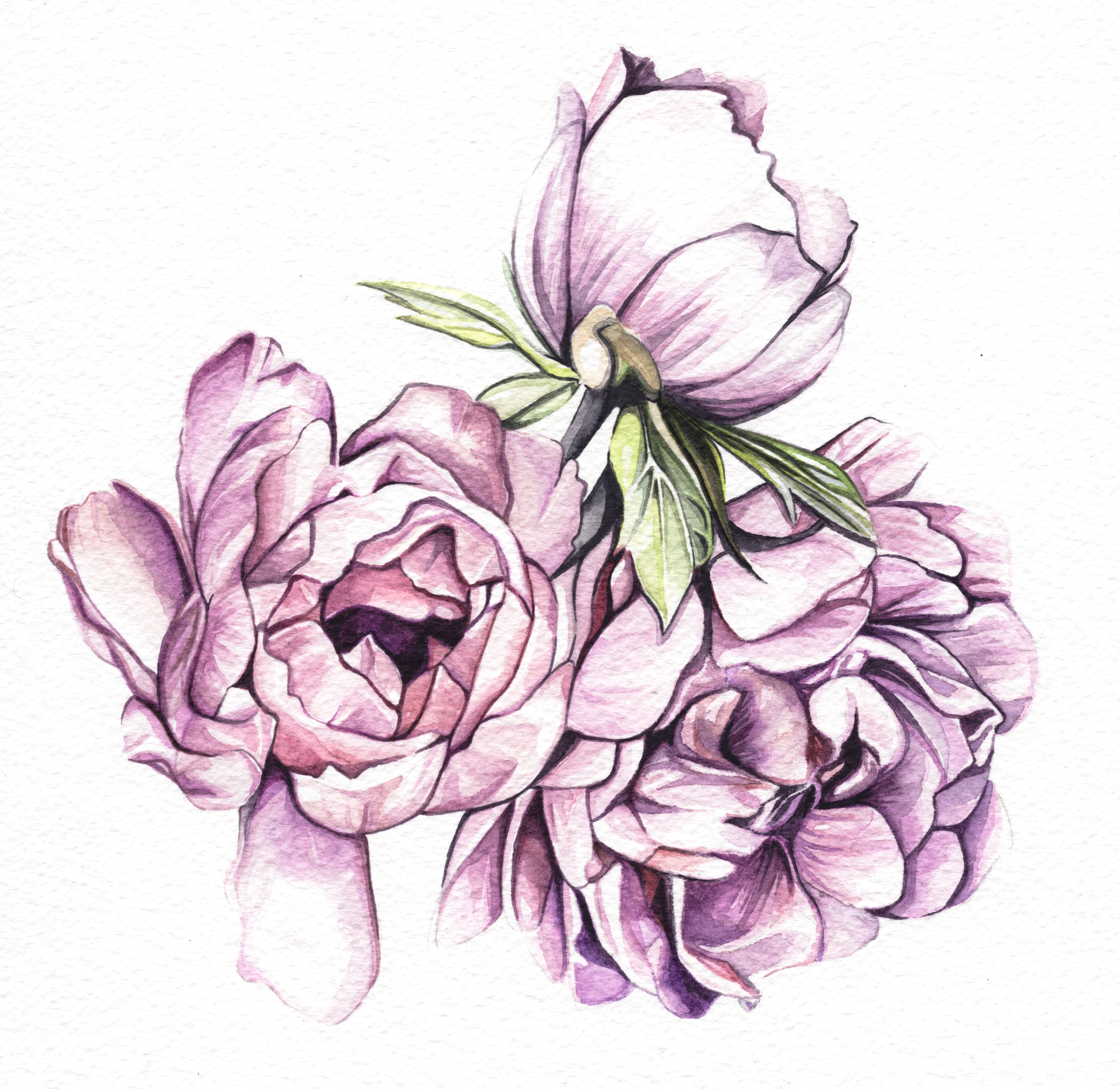 Three Peonies Watercolour Painting