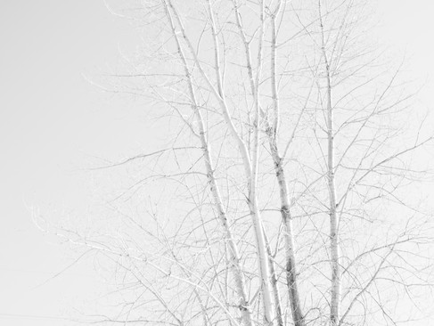 parc_-11.jpg
