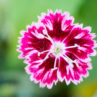 fleur-19.jpg