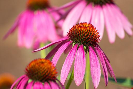 fleur-44.jpg