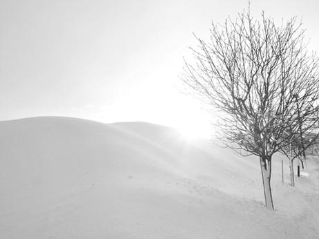 arbre_-28_edited.jpg