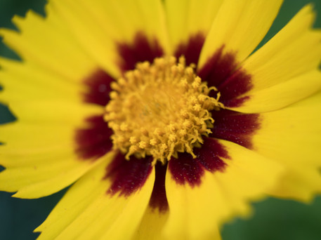 fleur-12.jpg