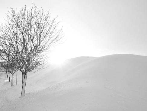 arbre_-28.jpg