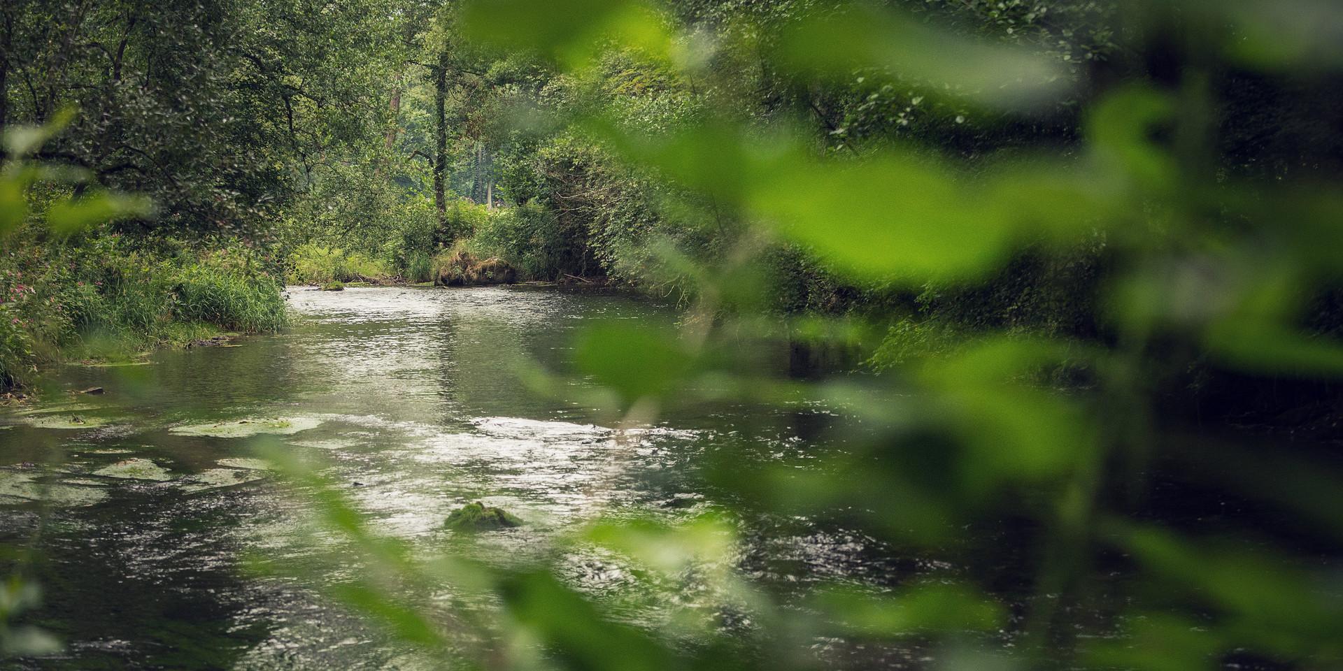 Fluss Regen