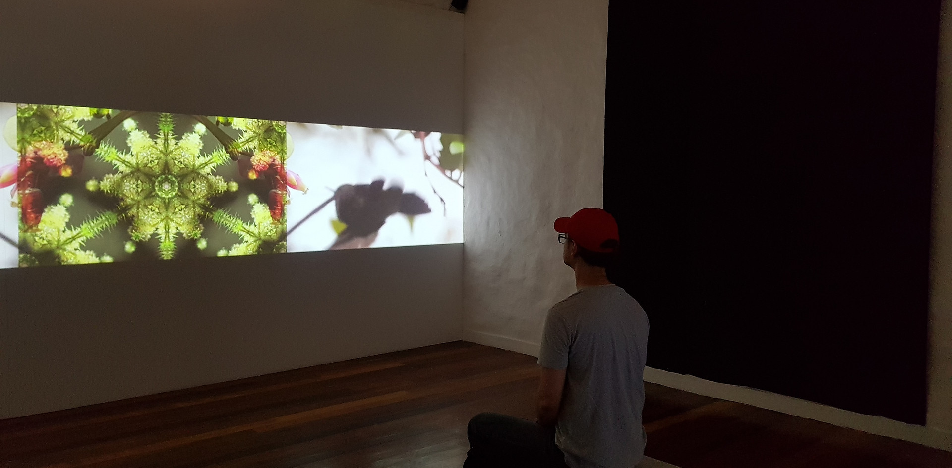 Museo del Río Magdalena, Exposición H2O, Endémica Studios