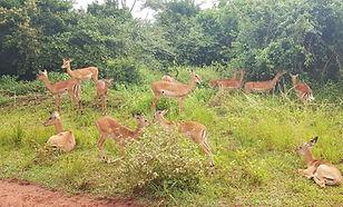 Akagera National Park Adventure by Countryside Tours-Rwanda