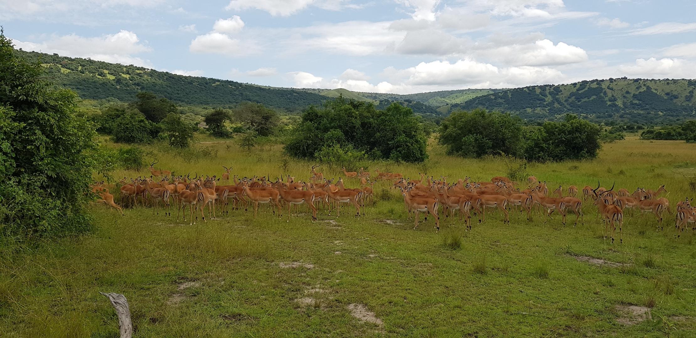 Countryside Tours-Rwanda
