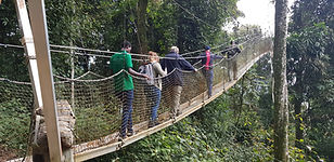 Nyungwe Canopy Walk by Countryside Tours-Rwanda