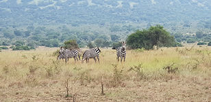Game Drive in Akagera National Park by Countryside Tours-Rwanda
