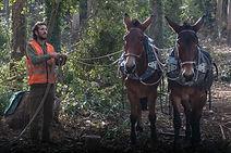 Trabalhos florestais - Ilha de Cortegada