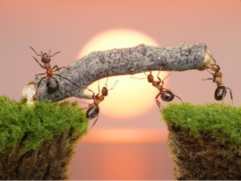 Lessons of the Ant