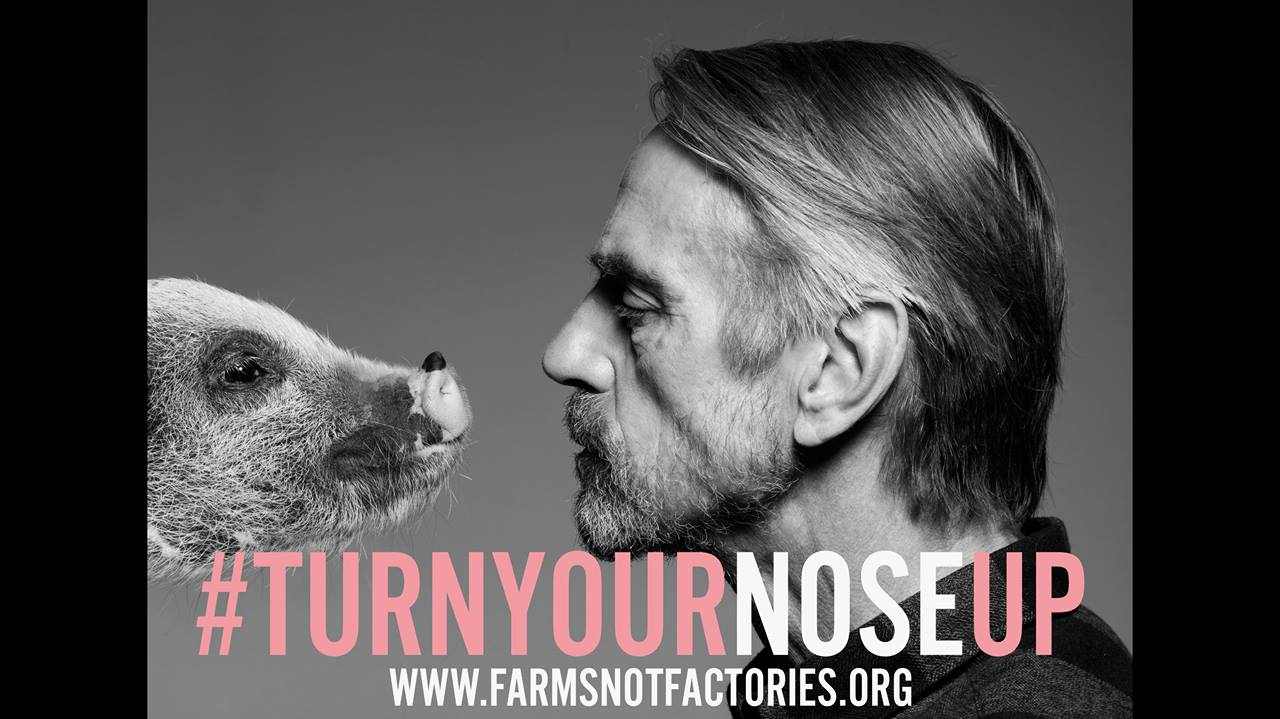 Find out why Academy Award winner, Jeremy Irons only buys pork...