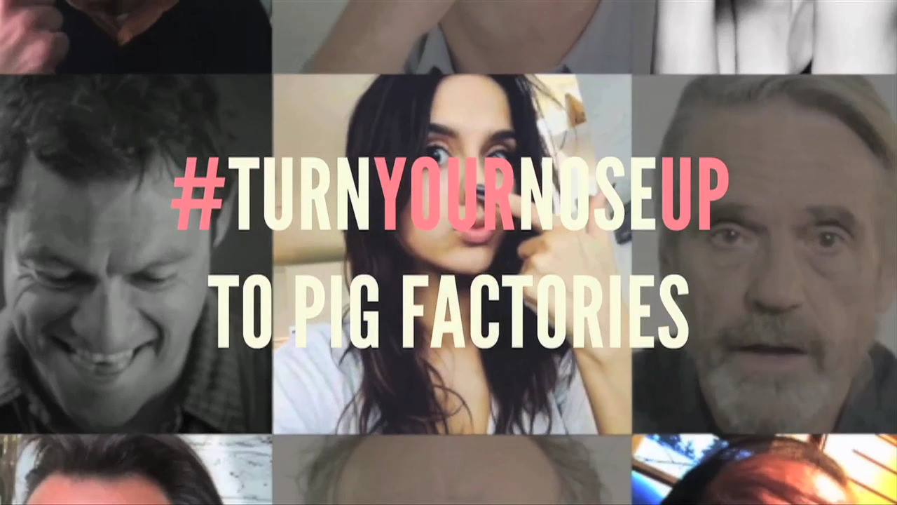 Celebrities turn their noses up at Pig Factories - #TurnYourNo...