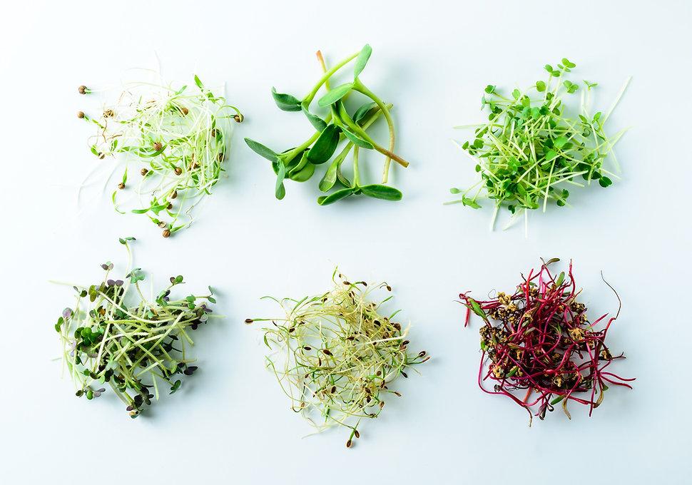 microgreen%20dill%20sprouts%2C%20radishe