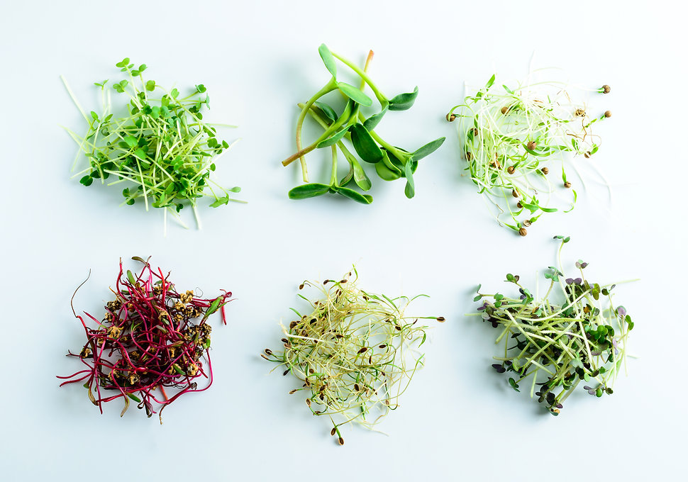 microgreen dill sprouts, radishes, musta
