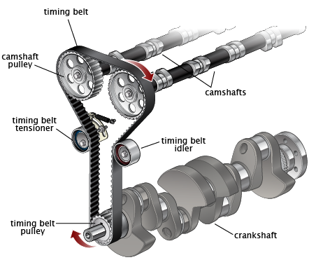 Main components of timing belt