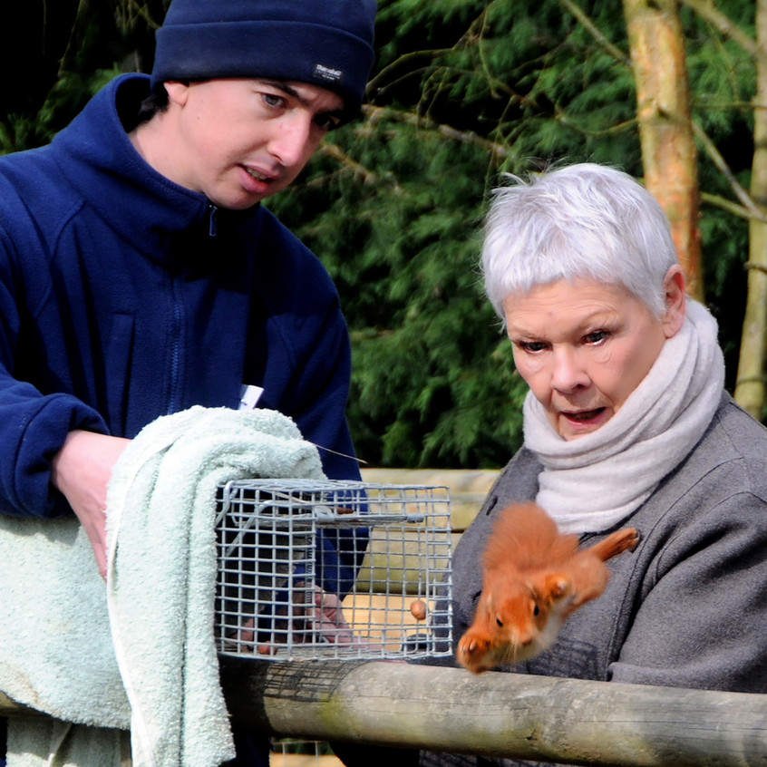At the opening of the new Squirrell enclosure at the British Wildlife Centre I caught the moment Dame Judi Dench released the first squirrell - this picture is immortalised on the wall at the centre!