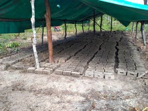 The first batch of new bricks.jpg