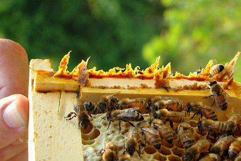 Bee Propolis 2 oz.