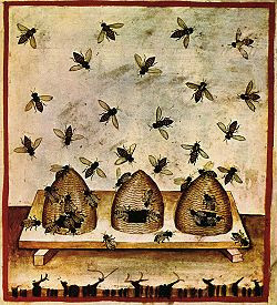 The Global History of Beekeeping