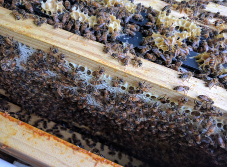 What is Propolis?