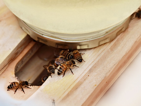 Overwintering Bees - Time Is Now!