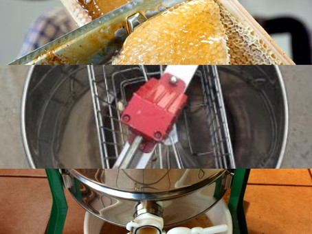 A little buzz on Honey Extraction for National Pollinator Week!