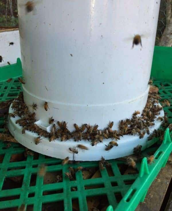bucket feeder