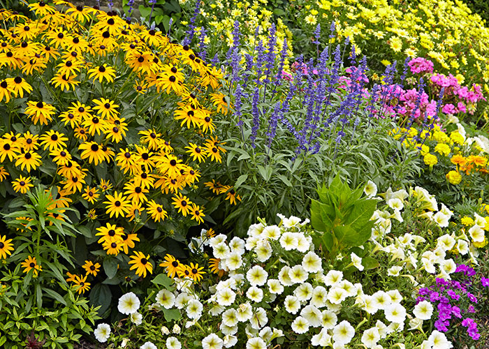 Wildflower Ground Cover2