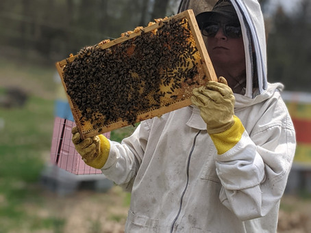Bee Feed Late Summer/Fall