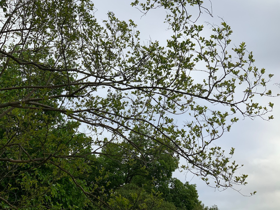 tree starting to bloom