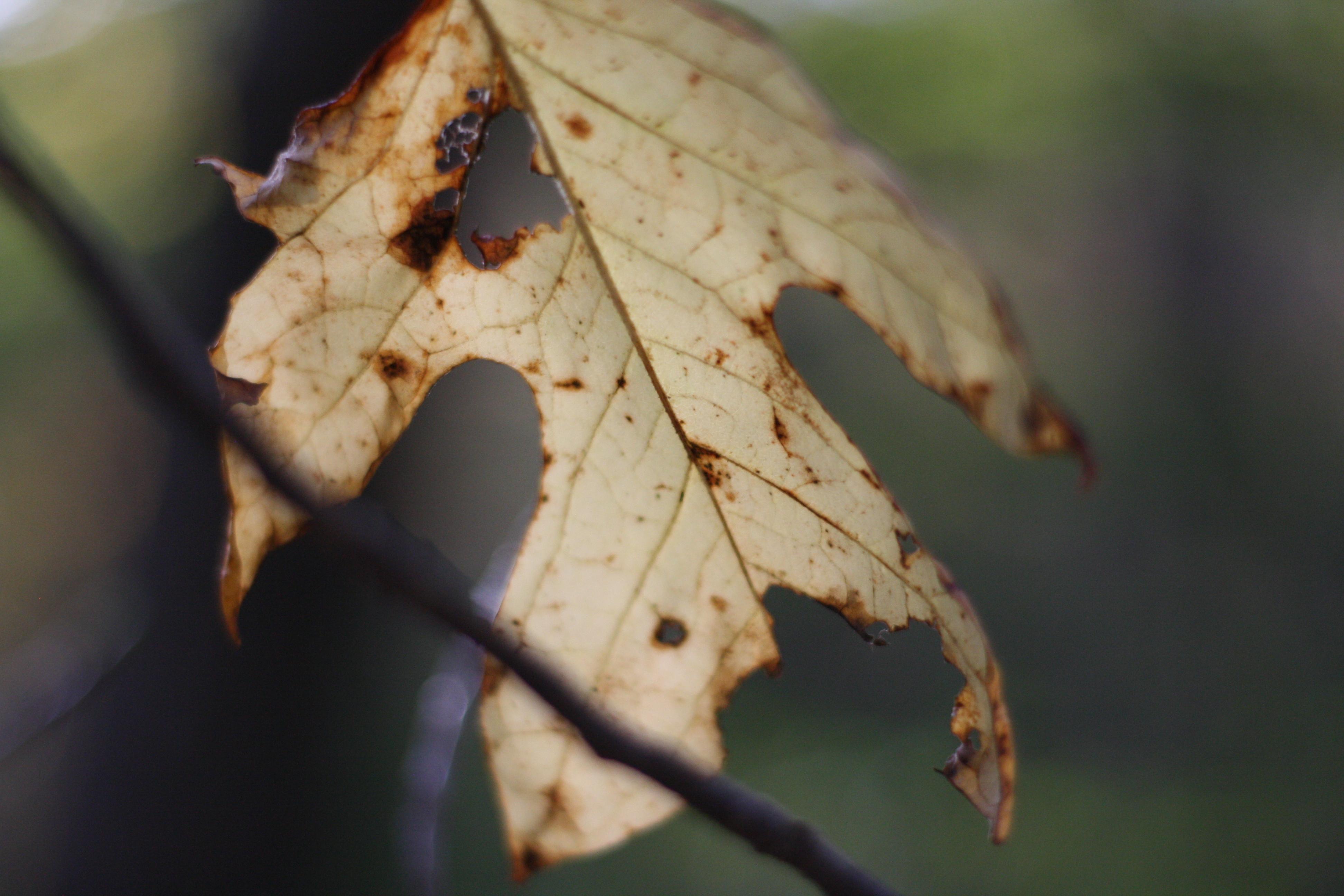 Leaf in Fall