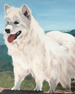 Samoyed Pet Portrait