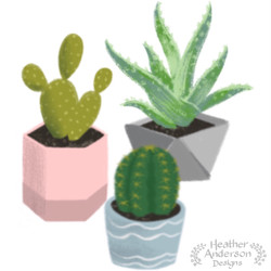 Heather Anderson Cacti in Pots