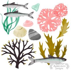 Heather Anderson Undersea Study