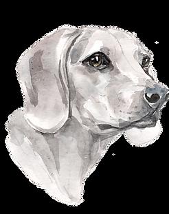 Dog_Full-e1570228162676-oeqt628yognqe8m2