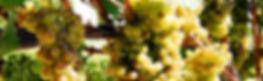 ソノマ,ソノマワイナリー,ソノマバレー,ソノマバレーワイナリー,ソノマワイナリーツアー,ソノマワイン,カリフォルニアワイン,ソノマチャーター,ワイナリーチャーターツアー,チャーターワイナリー巡り,ソノマワイナリー チャーター
