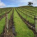 Kistler Vineyards.jpg