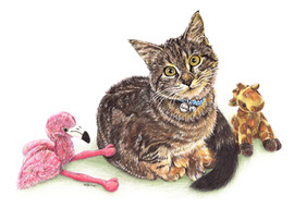 Cat Kitty Pet Portrait
